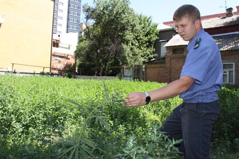 Комнатные растения определить по фото куйсеб замедляет